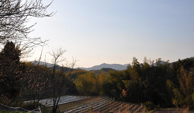 香川三豊地区